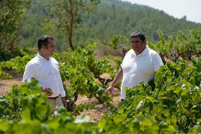 Un vino gastronómico nacido en el corazón de las viñas Alemany i Corrio.